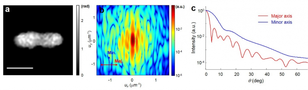 (left) quantitative phase image of a bacterium, (middle) 2-D angle-resolved light scattering pattern of the bacterium, (right) angle-resolved light scattering as a function of scattering angles.