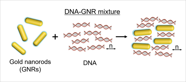 Fabrication processes to make DNA-GNR films shearing. The PEGylated GNR and DNA material is mixed together well, which is sheared to orient uniaxial (n) with mechanical rubbing like doctor blading method.